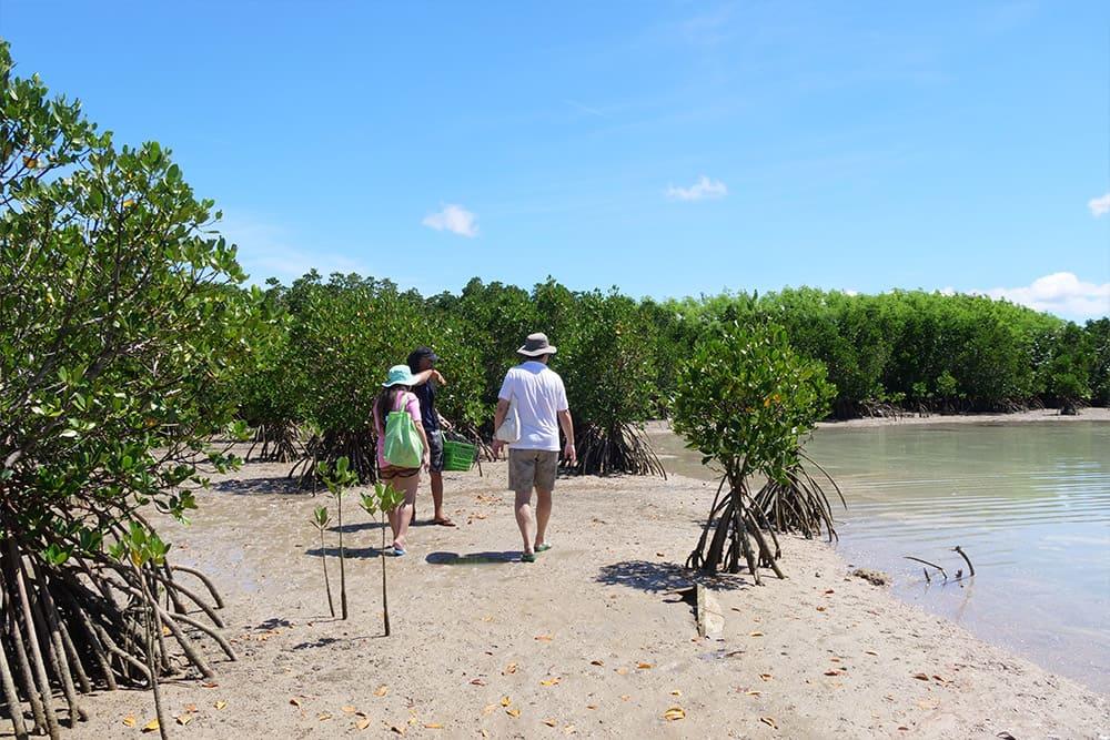 マングローブ林を探索